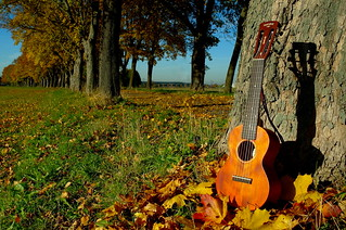 "Autumn Avenue with guitalele (""Guitar Ukulele"" by Gretsch) 