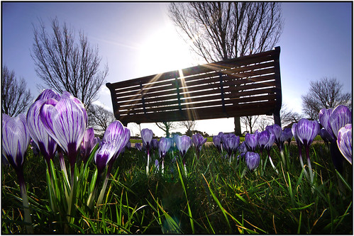 trees sun grass bench spring bluesky portsmouth croci crocuses purplecrocus sigma1020mm southseacommon a65 happybenchmonday alpha65
