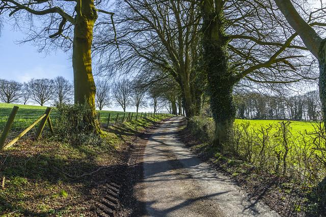 Tree lined Lane