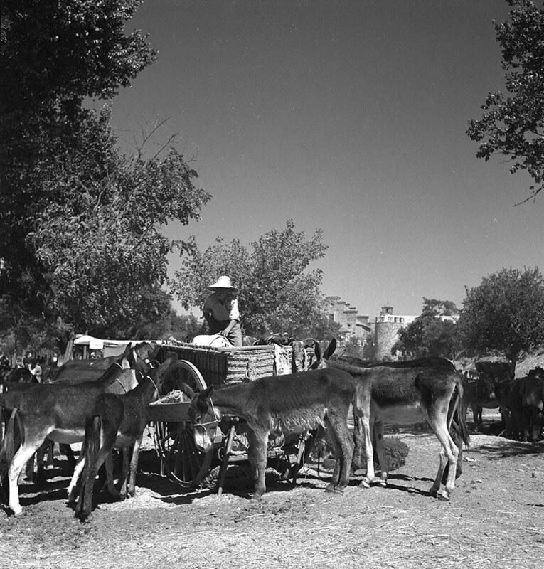 Mercado de ganado en el Paseo de Recaredo de Toledo en los años 50. Fotografía de Nicolás Muller  © Archivo Regional de la Comunidad de Madrid, fondo fotográfico