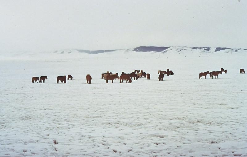 MONGOLIA 1994 01-0018