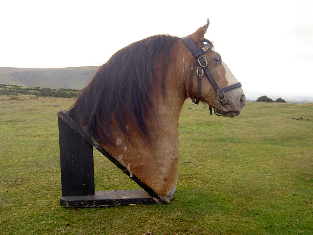 All Sizes Taxidermy Clydesdale Shire Horse Honest Tom Flickr Photo Sharing