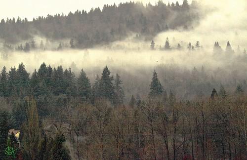 trees mist mountains fog burnabybc treesilhouettes treesinmist alltrees mistrollingin mountainsinmist mistscenes