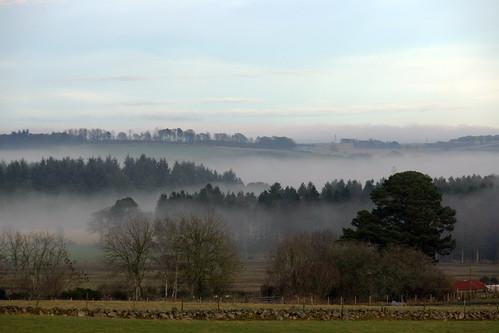 field trees mist landscape scotland aberdeenshire rural fog nature travel
