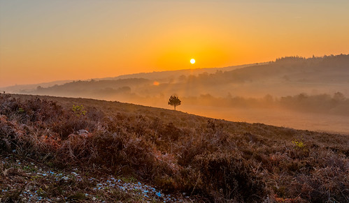 newforest nature sun sunrise bracken heath tree mist landscape