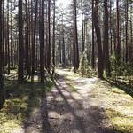Spring in Dzukija Forests (01)