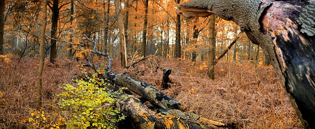 's Graveland Autumn forest with dreary brown colored ferns