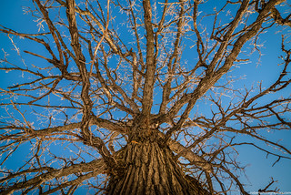 Winter Tree detail at Riis Park Chicago, IL | by RobertPhotographics