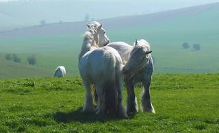Ridgeway Horses