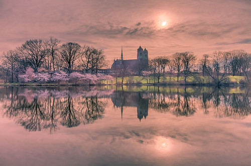reflection calm water morning cherry spring sun lawn cathedral