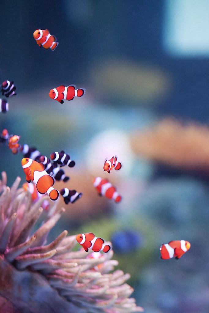 Sea Life Aquarium | latteda | Flickr