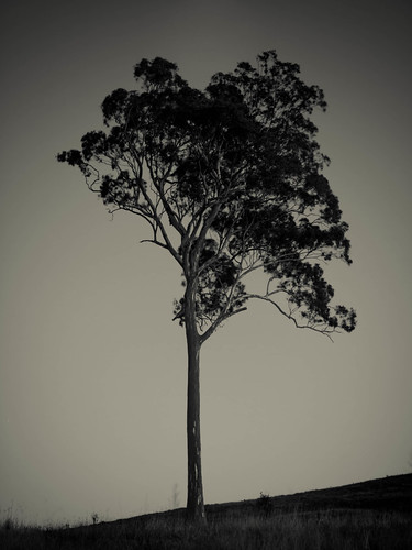 longexposure blackandwhite lake monochrome sunrise blackwhite sydney australia newsouthwales canoneos blackandwhitephotography clearskies westernsydney monochromephotography 50d zbw cecilhills cameradetails sigma1750mmf28exdcos