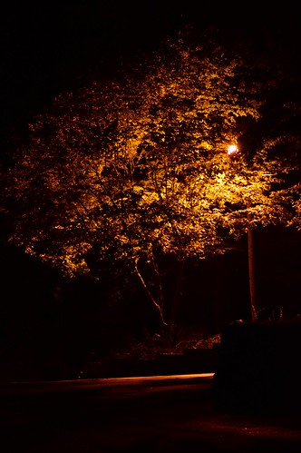 longexposure light tree lamp leaves yellow night dark gold drive parkinglot shadows lamppost