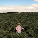 Lewins Vegetable Farm, Long Island, NY by KenVasquezPhoto