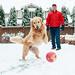 Merry Christmas, everyone! by Brady the Golden Retriever