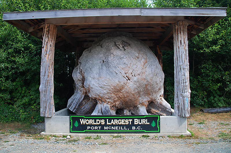The World's Largest Burl is in Port McNeill, Vancouver Island, British Columbia, Canada