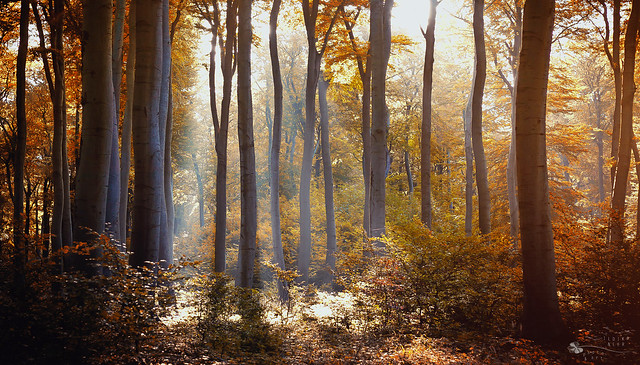 United Colors of Woods