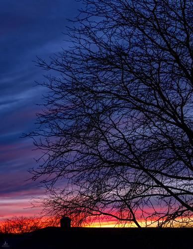 evening sky romance sunset colors colorfull single tree hdr fusion photomatix j2 on1