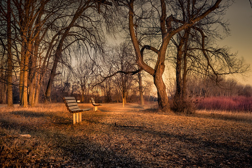 canoneos5dmarkiv february winter lakehuron saginawbay michigan midmichigan baycity baycitystatepark sunrise bench trail tree park