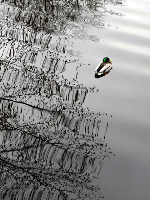 Resting in ripples
