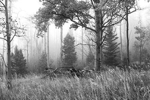 trees blackandwhite bw fog forest colorado mood moody cuchara