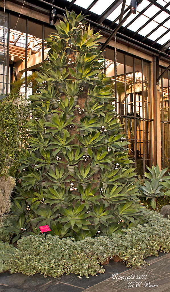 Blue Flame Agave Pots Christmas Tree At Longwood Gardens O Flickr