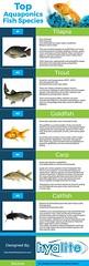 Top Aquaponics Fish Species