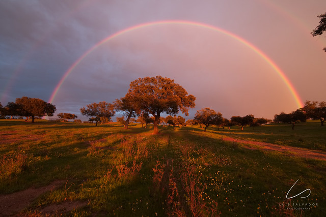 The Oak and the 2 rainbows