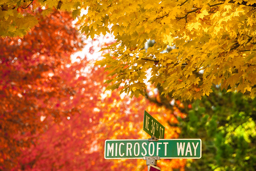 Autumn leaf color, Microsoft Way at Microsoft Campus, Redmond, Washington | by Dixin, Official Photographer of Seattle Seafair