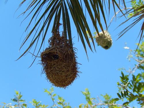 Sesfontein fort - vogelnestjes