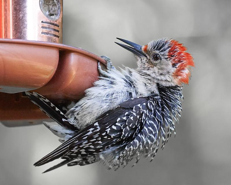 Bird edits