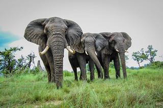 Botswana 2014 | by jthetzel