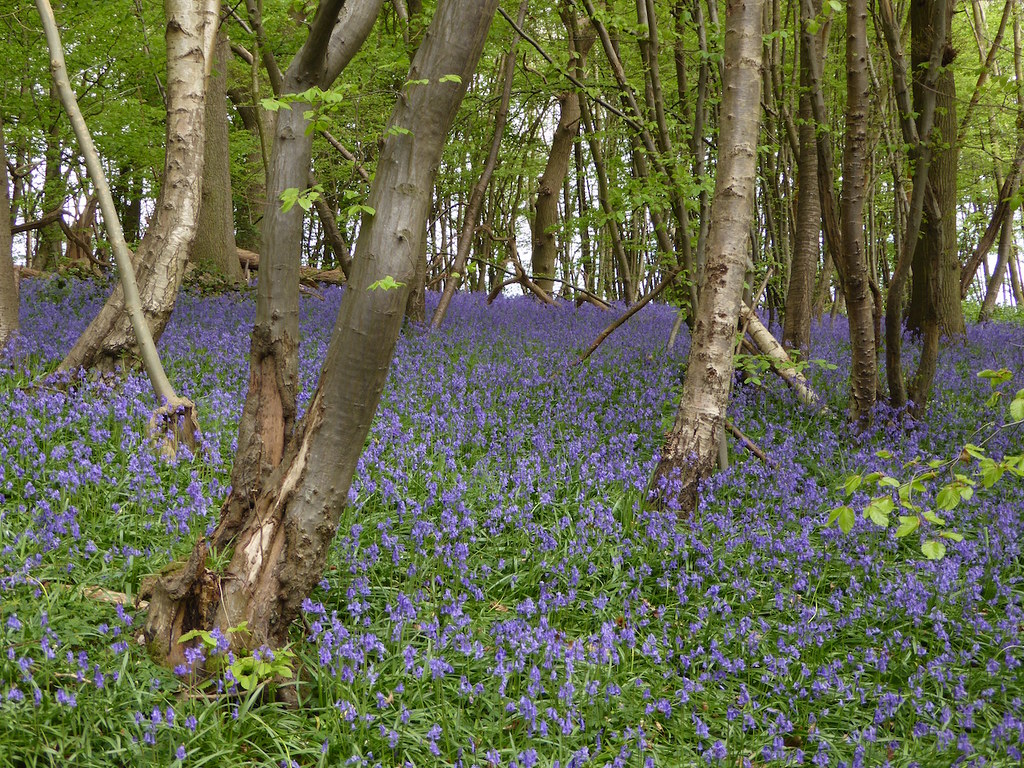 Near Chartham, Kent