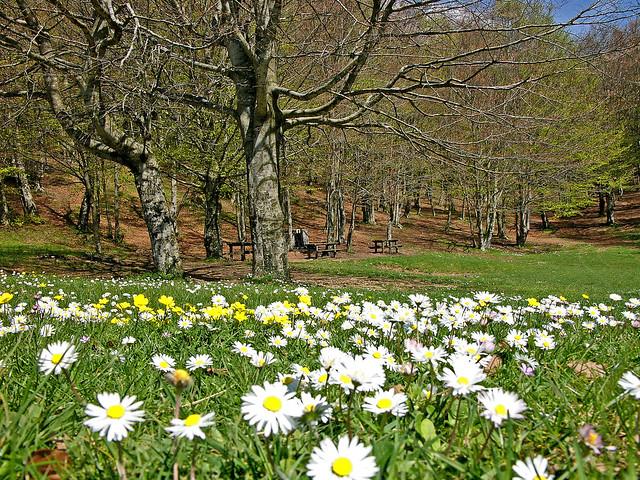 La  primavera apre i fiori per  dipingere un terreno sorridente-Spring opens flowers to paint a smiling ground