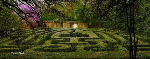 colonialwilliamsburg virginia gardenmaze garden governorspalace green puzzle history williamsburgvirginia historicwilliamsburg springtime springinvirginia
