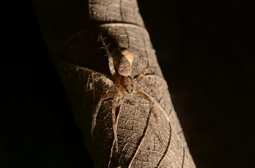macro spider nature kerala leaf