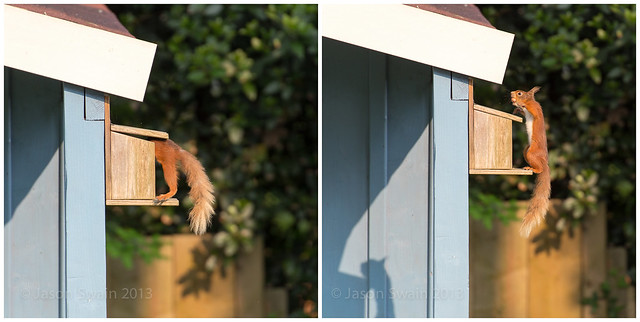Nuts diptych