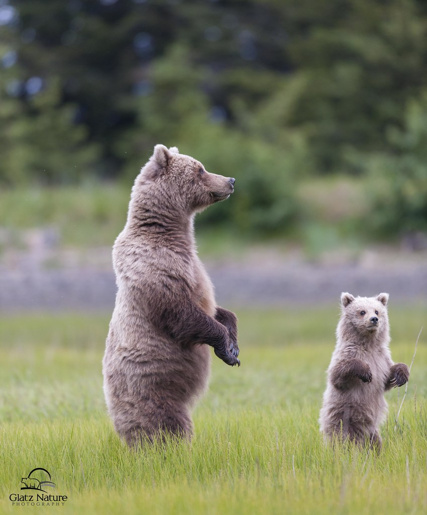 Helping Mother Bear Catch The Scent