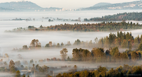 morning travel autumn summer sky mist mountain canada tree green tourism nature ecology beautiful beauty field weather misty fog rural forest wonderful season landscape dawn countryside early haze woods view natural outdoor britishcolumbia background hill foggy scenic meadow nobody scene valley land environment idyllic mapleridge tranquil ubcmalcolmknappresearchforest
