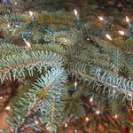 Xmas tree, undecorated. Maybe next year?