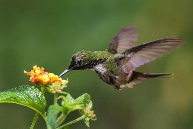 Fast feeding