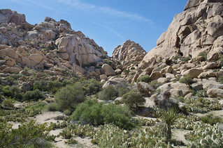 Wonderland of Rocks | by Joshua Tree National Park