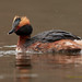 Horned Grebe - Photo (c) Magnus Lindberg - Close to nature, some rights reserved (CC BY-NC-ND)