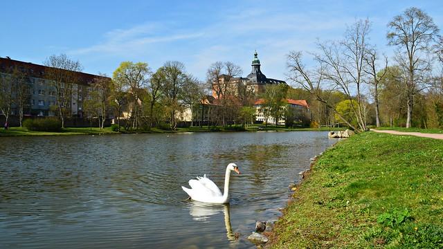 Schwan und Schloss