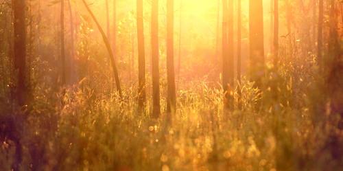 light sunset lana nature forest landscape woods louisiana pines grasses gramlich abitasprings tnc thenatureconservancy sttammanyparish fantasticnature abitacreekflatwoodspreserve dragondaggerphoto pinesavanna bestcapturesaoi elitegalleryaoi canoneosrebelt2i lanagramlich jul122013