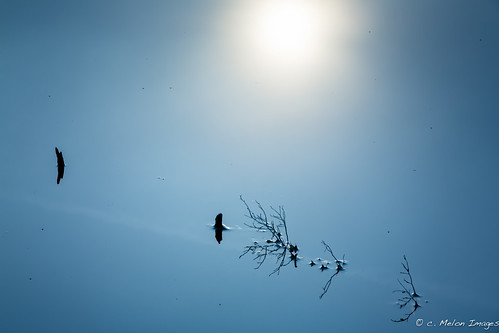 morning blue summer sun mist reflection water beautiful lines fog sunrise canon landscape dawn shapes wb minimal 5d bog minimalist pinebarrens 2013 canon24105 5dmarkiii