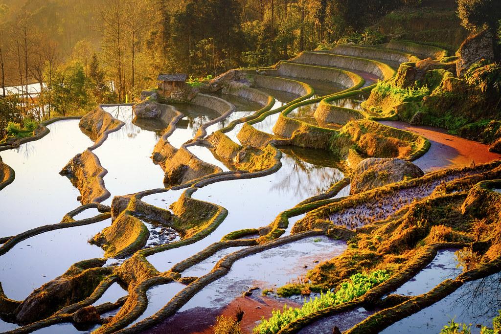 Yuanyang Rice Terraces (UNESCO World Heritage)