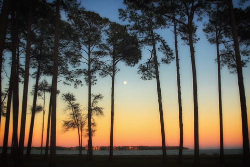 daufuskieisland daufuskietime sunset islandtime hiltonhead southcarolina us atlantic beach trees silhouette moon color dorameulman canon canon7dmark11 outdoor beautiful haiku poem