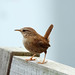 Wren by Mike Pointon Photography