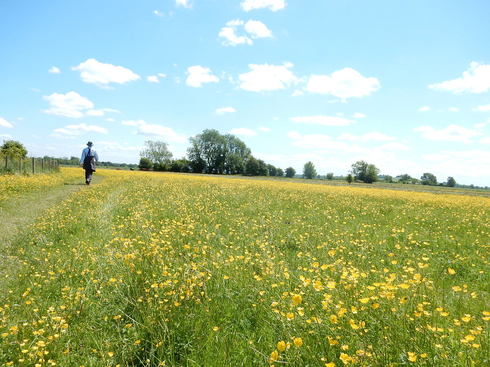 Walking through buttercups Didcot Circular